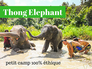 Thong Elephant experience ethique a Chiang Mai